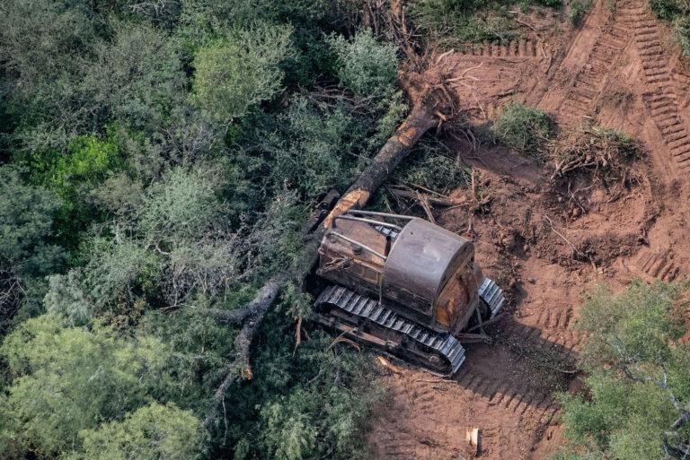 Deforestación en el Chaco argentino. Foto: Greenpeace Argentina.