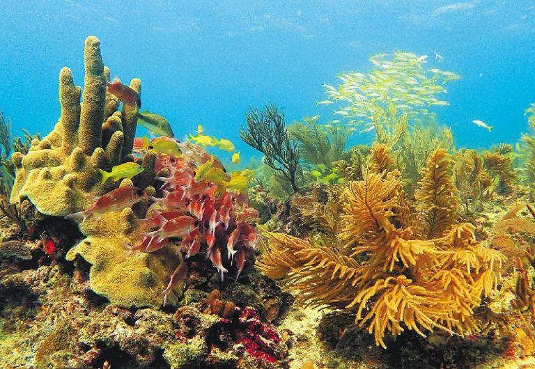La importancia de los arrecifes