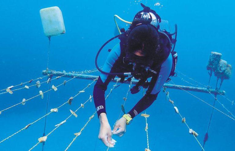 Jardinera de corales