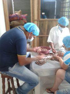 Nelson obando seleccionando cacao.